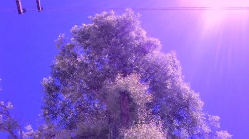 Copia de arbolín.jpg
