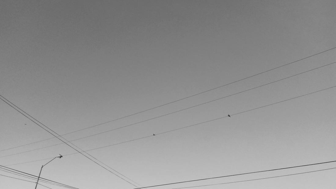 pájaros.jpg